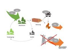 Bewirtschaftete Wälder entlasten das Klima